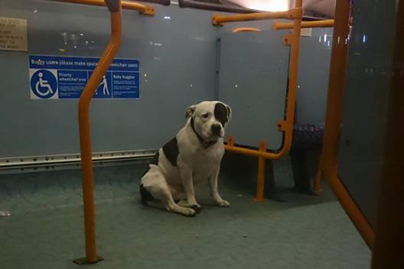 busdog
